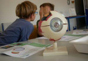 Wie funktioniert unser Auge? am Modell können es die Kinder genau untersuchen.